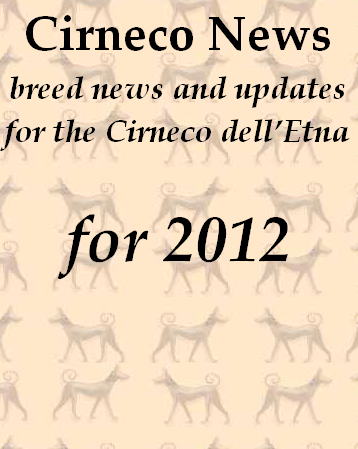 Cirneco dell'Etna news