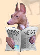 Cirneco News & Updates